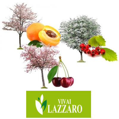 piante da frutto | Vivailazzaro.it