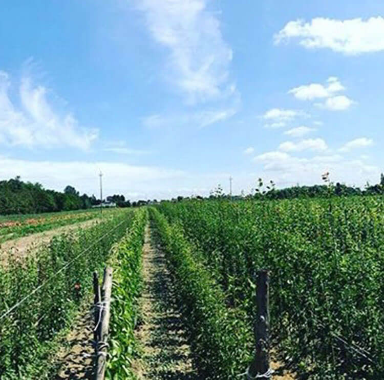 Coltivazione di piante da frutto in campo aperto fino alla commercializzazione | Vivasilazzaro.it