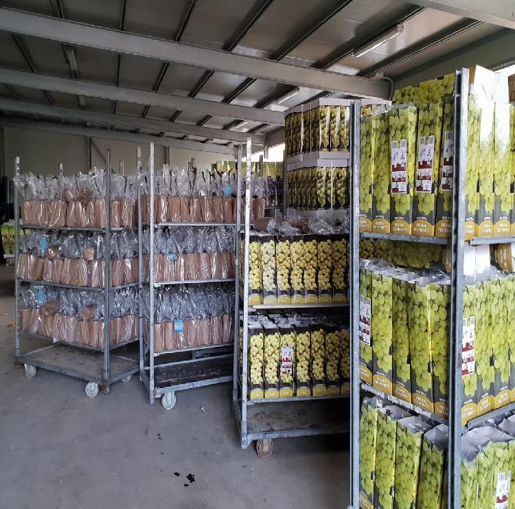 Vendita di piante confezionate in involucro biodegradabile | Vivailazzaro.it