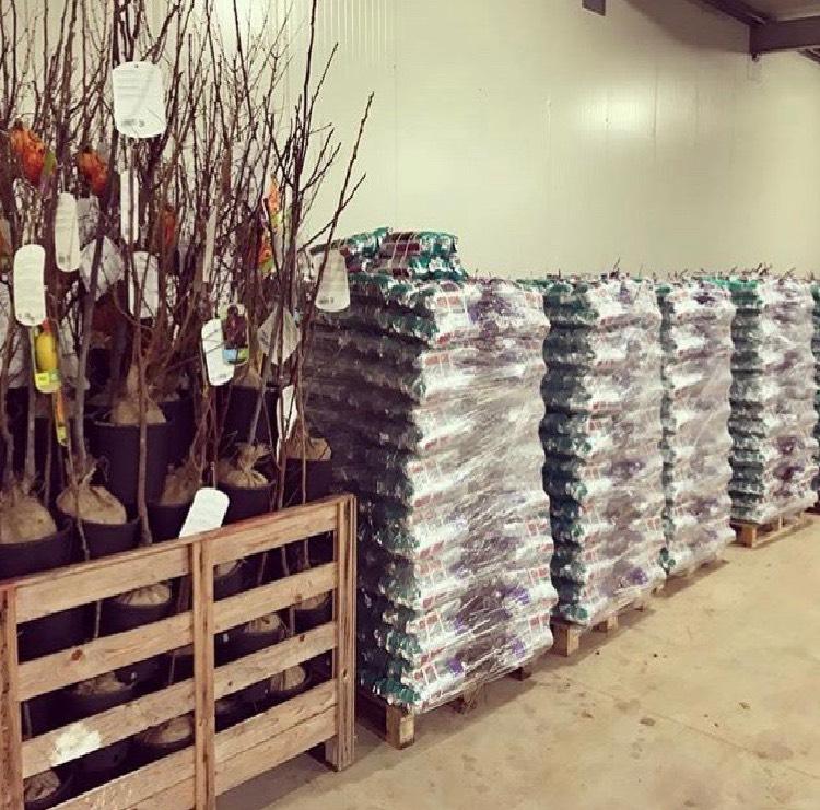 Vendita di bancali di rose da 360 pezzi | Vivailazzaro.it