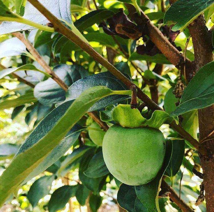 Coltivazione in campo | Vivailazzaro.it