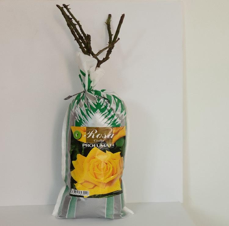 Produzione e vendita piante di rose in scatola biodegradabile | Vivailazzaro.it