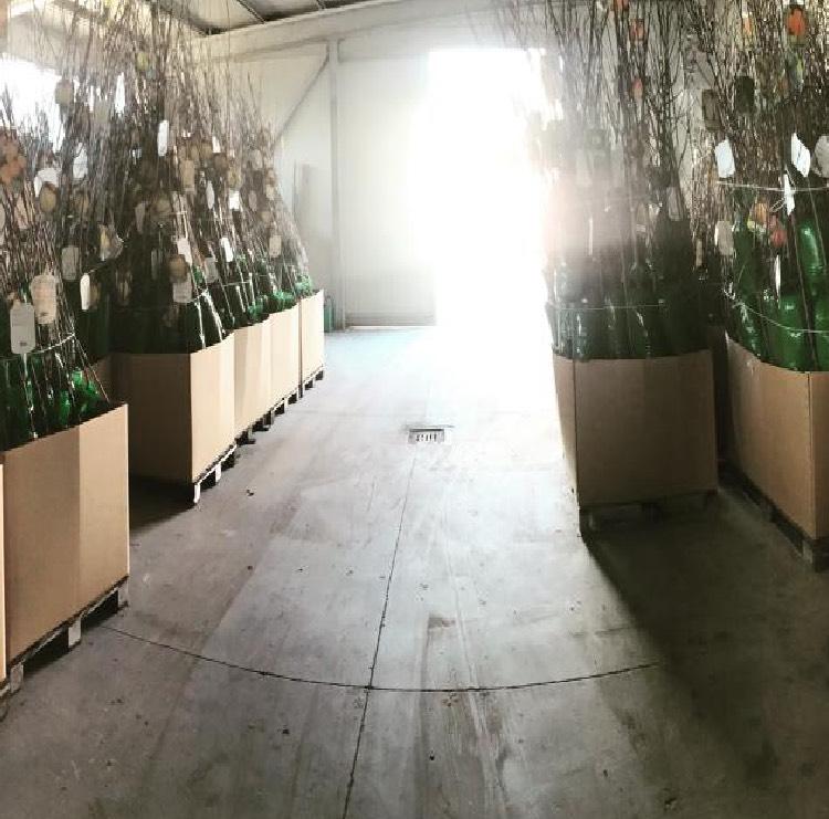 Vendita piante da frutto confezionate in involucro di PVC | Vivailazzaro.it