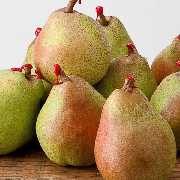 Pero Decana del comizio produce frutti di pezzatura grossa | Vivailazzaro.it