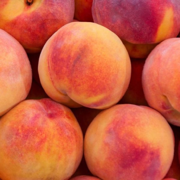 Pesco Glohaven produce frutti di grosse dimensioni | Vivailazzaro.it