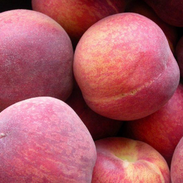Pesco Springlady albero da frutta con portamento assurgente   Vivailazzaro.it