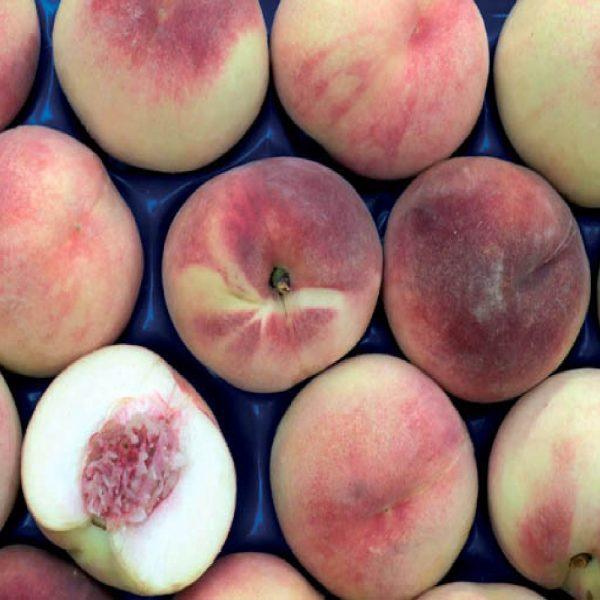 Albero da frutto Pesco Maria Biancacon portamento assurgente | vivailazzaro.it