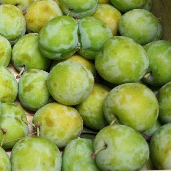 Vendita online della pianta da frutto Susino Stanley | Vivailazzaro.it