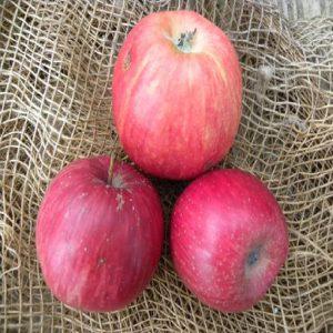 Melo Rubra precoce è una pianta vigorosa a portamento espanso, con buona produttività.   Vivailazzaro.it
