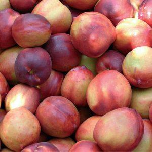 Pesco noce Sweed Red è un albero che produce frutti di grossa pezzatura | Vivailazzaro.it