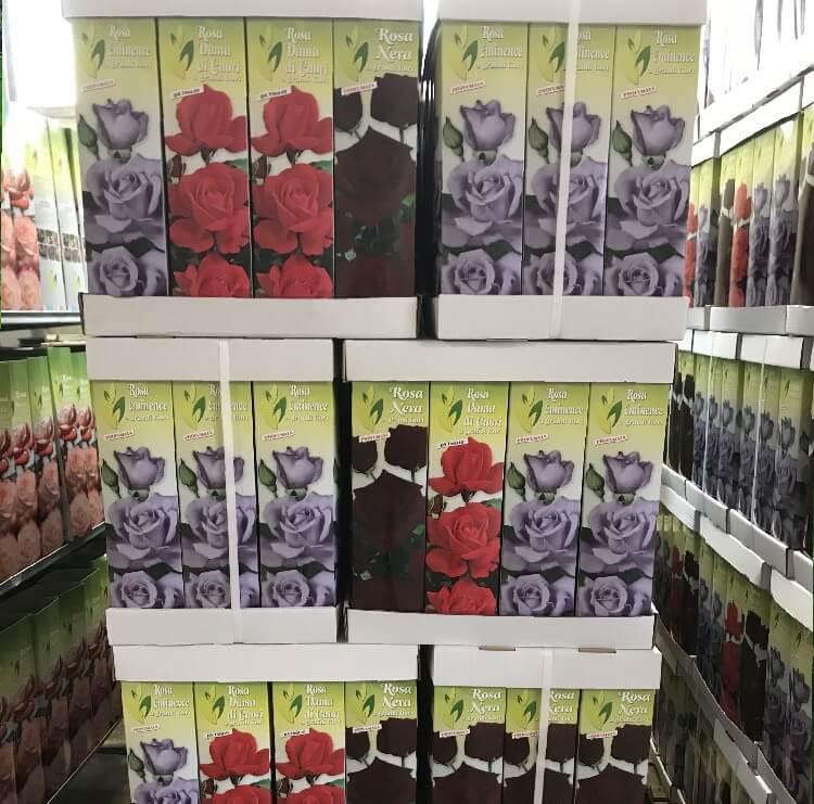 Vendita online di rose in confezione | Vivailazzaro.it