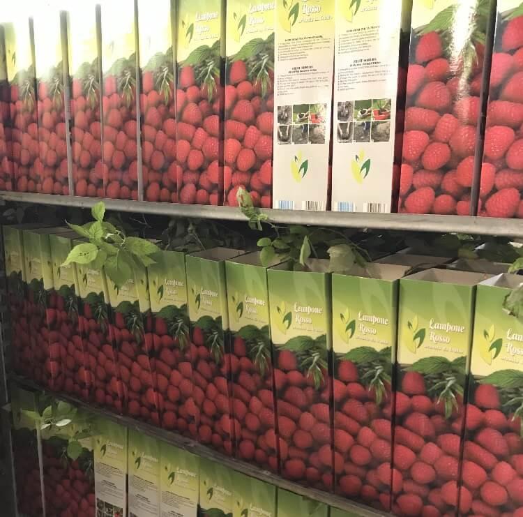 Vendita di arbusti da frutto in confezione biodegradabile | Vivailazzaro.it