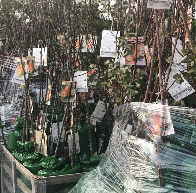 Vendita piante in confezione | Vivailazzaro.it
