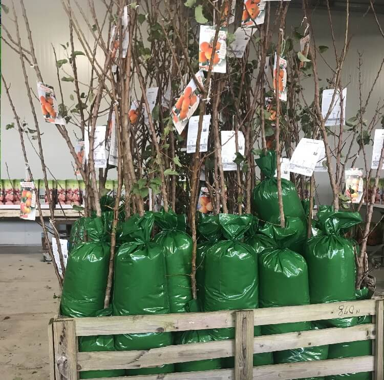 Vendita online di piante in confezione in PVC | Vivailazzaro.it