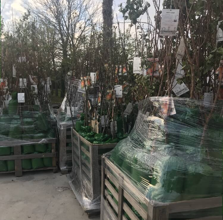 Vendita piante da frutto in involucro in PVC | Vivailazzaro.it