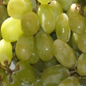 Uva Sultanina produce grappoli medio grandi | Vivailazzaro.it